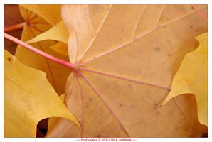 Autumn by MushroomMagic