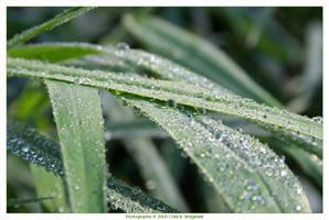 Droplets by MushroomMagic