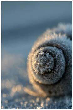 Frozen Spirals
