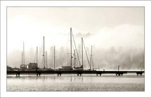 Misty Morning by MushroomMagic