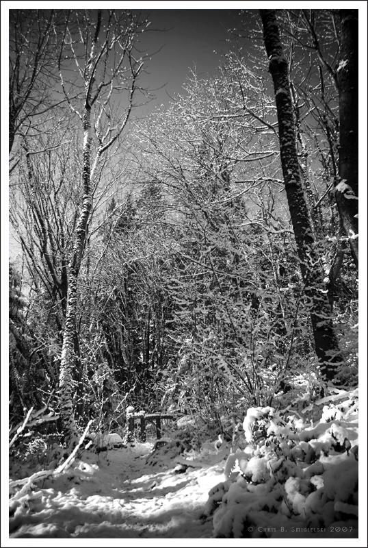 Dead of Winter by MushroomMagic