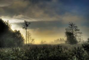 Mystic misty morning by Seselgis