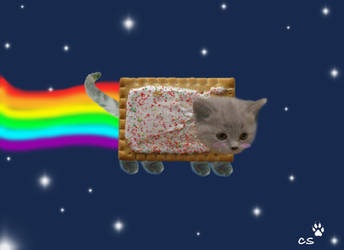 Nyan Cat-Poptart cat by wolfhowler14