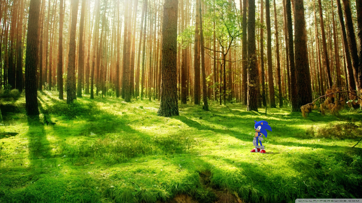 Sony Developing 'Sonic the Hedgehog' Live-Action/CGI Movie | Load ...