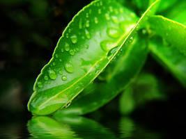 Wet Beauty by MohsinNaqi