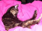 Cresent Moon Cat