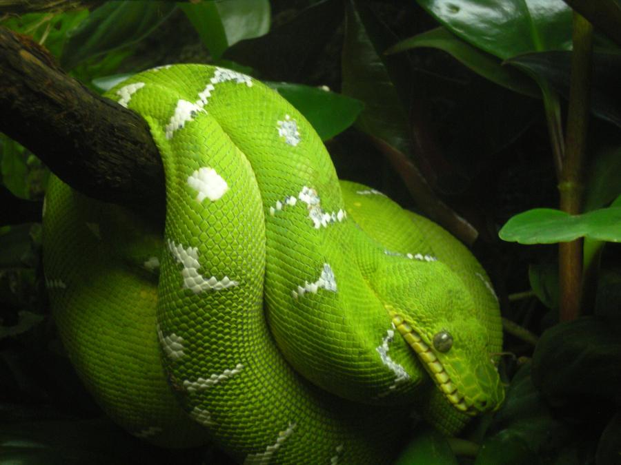 Tree Snake2 by tru-wulf