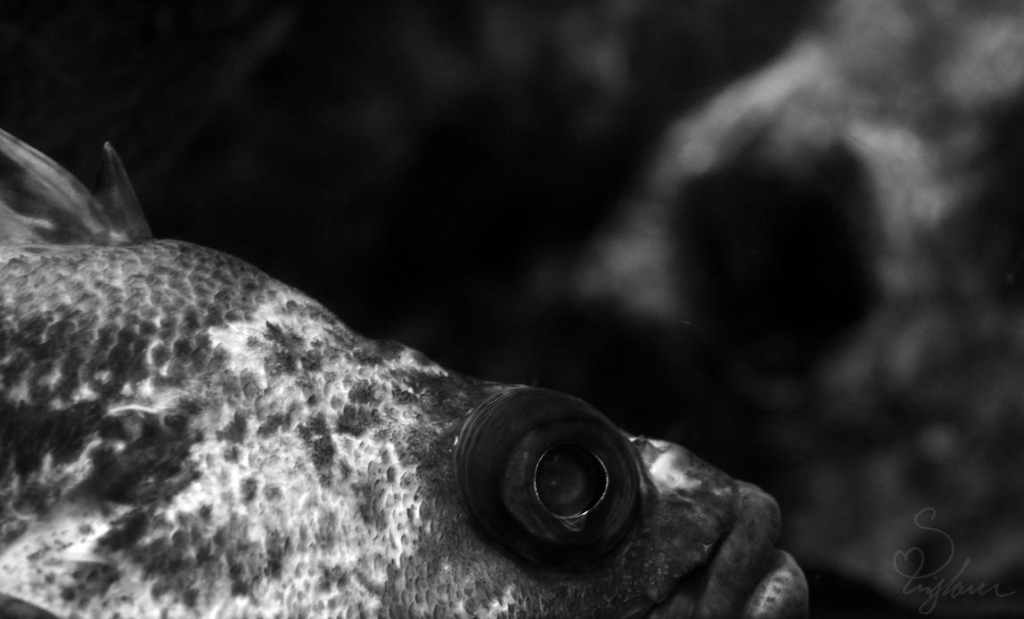 Fish. by tru-wulf