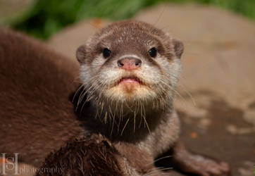 Otter Pup IV  by Sato-photography