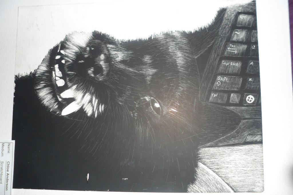 Schipperke Scratchboard by Silver4Espeon