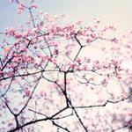 in.bloom