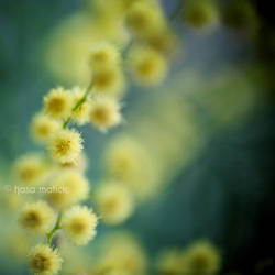 touch of brightness by tjasa