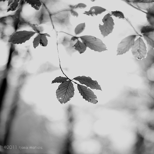 jesen by tjasa