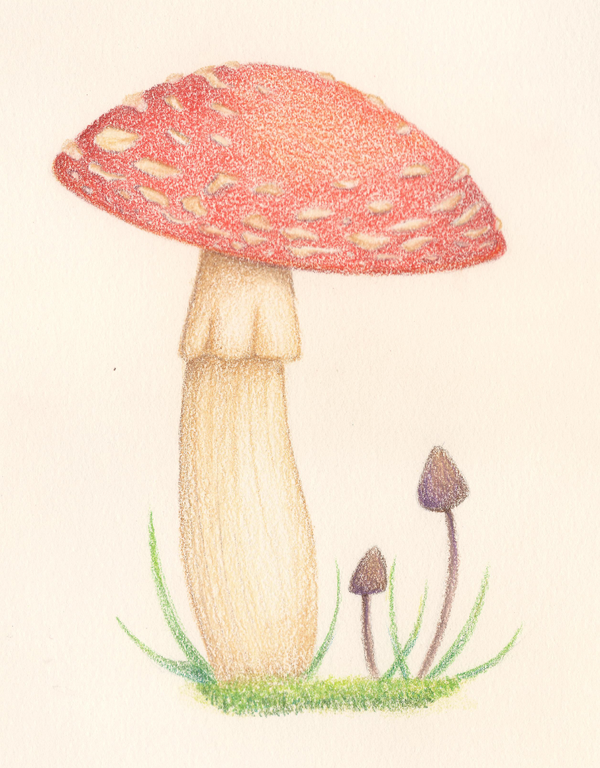 Mushrooms by EternalNight11