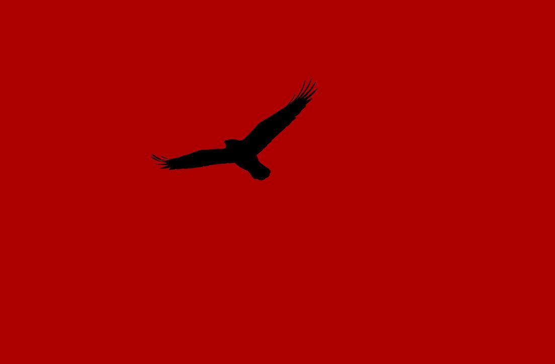 [Obrazek: bird_photo_by_sithisdagoth-dacu2cb.jpg]