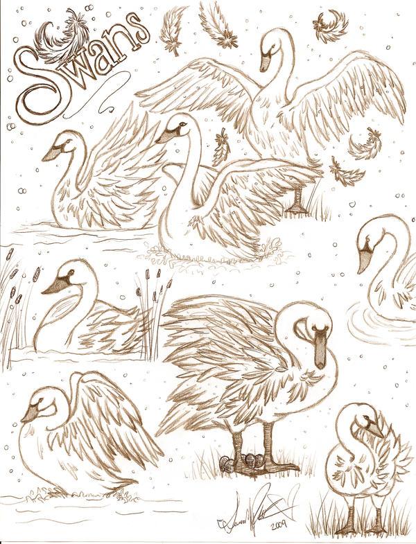 Love swan sketch