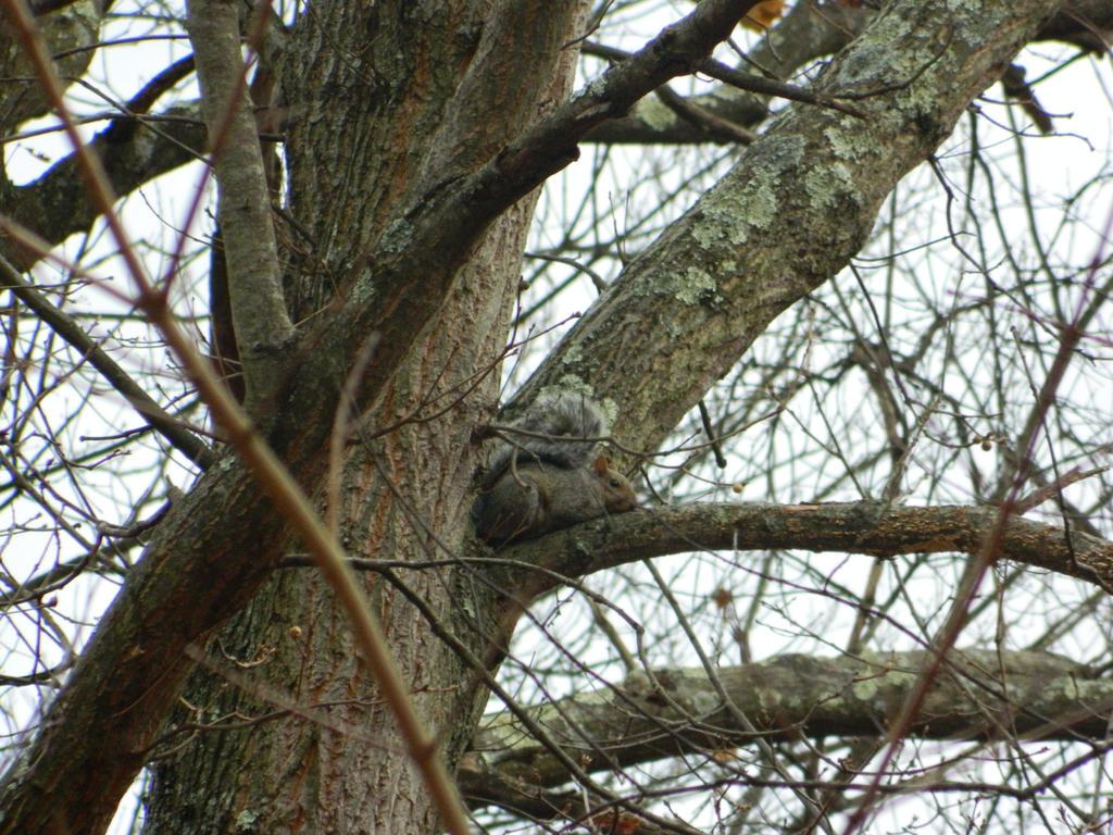 Squirrel2 by SilentArtist-A