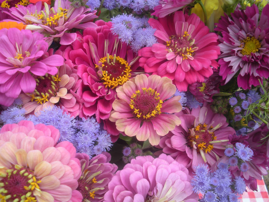 Pink and purple flowers by justmeandacamera on deviantart pink and purple flowers by justmeandacamera mightylinksfo