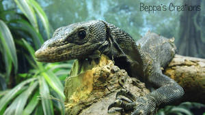 A Shedding Lizard by BeppasCreations