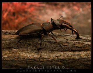 Stag beetle III by Szavas