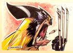 Barking Wolverine