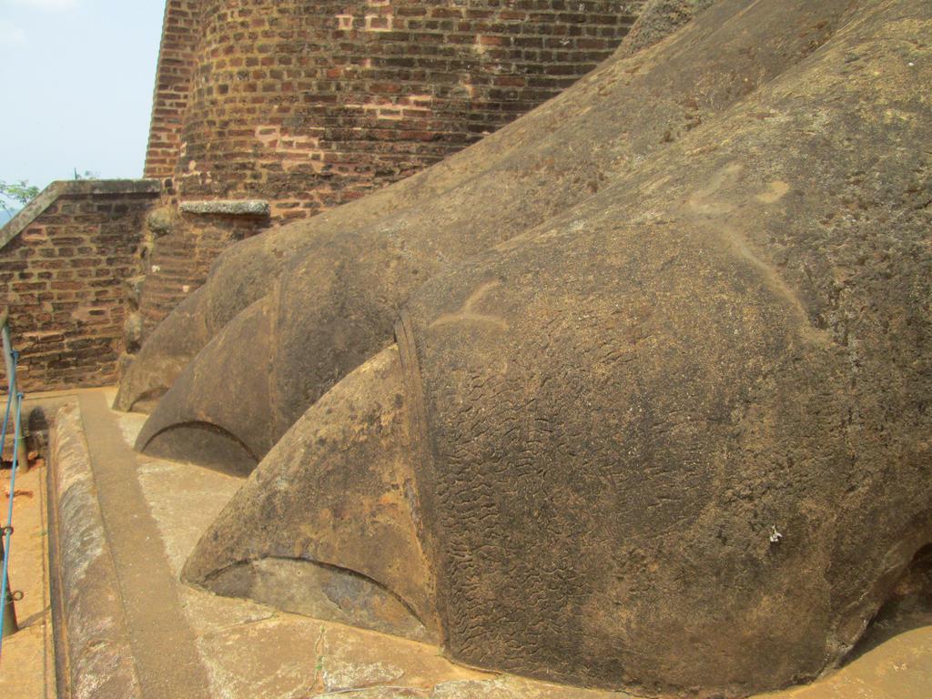 Sigiriya Lion's Paw by aliasjjj