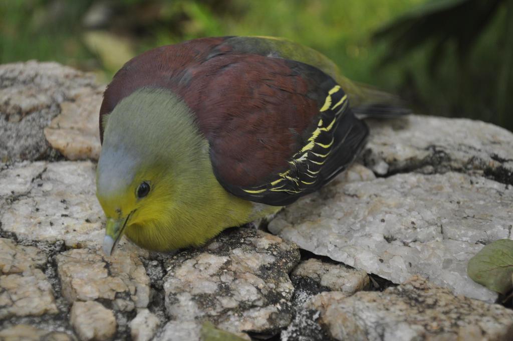 Bird at Deer Park Hotel (Sri Lanka) by aliasjjj