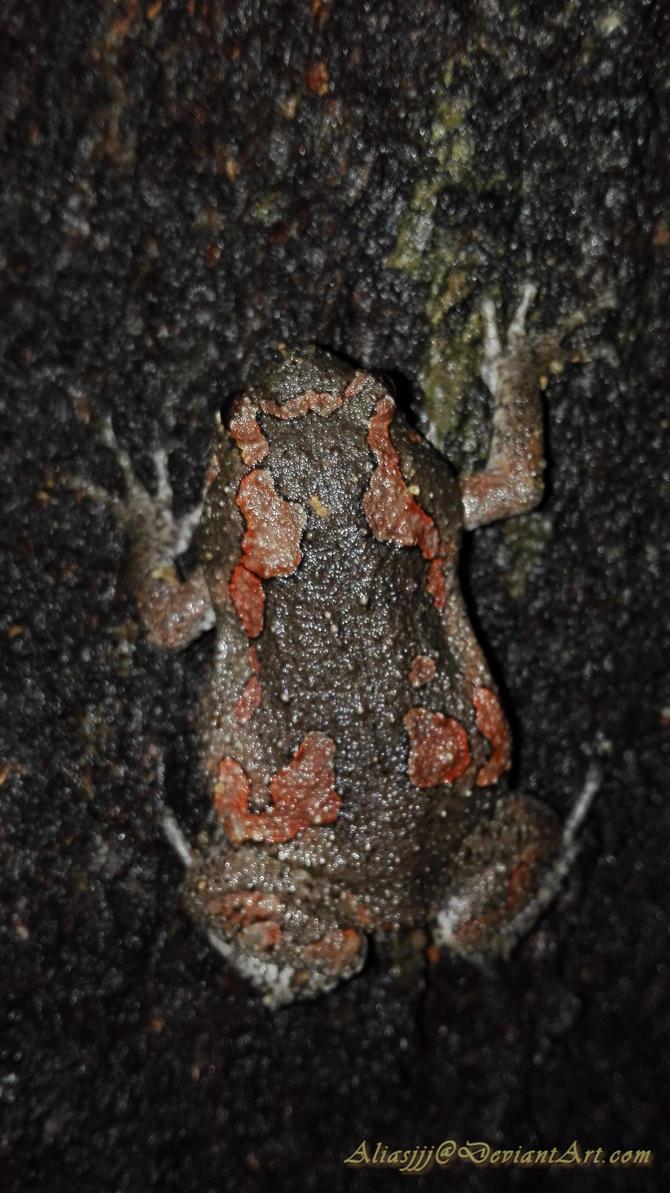 Frog II by aliasjjj