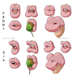 Inflated Lips Reference Sheet 2