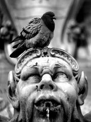 Trevi's Bird