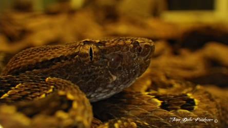 Reptile by Peak032