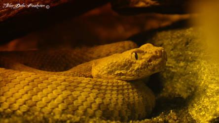 Rattle snake by Peak032