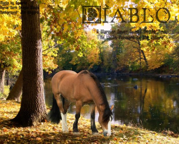 ^ Twilightstars ^ horses Diablo_Horse_Manip_by_LadyAquaria