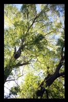 Untitled Tree 2 by strikenz