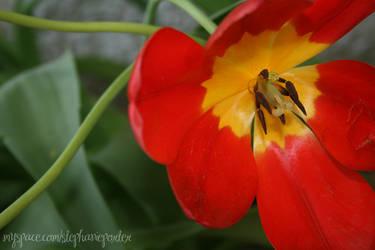 Flower. by Miss-Vengeance