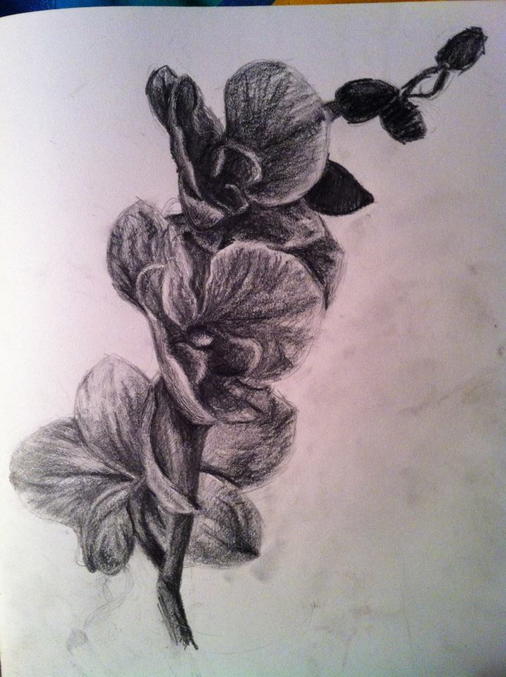 Orchid Drawings Orchid Drawing by
