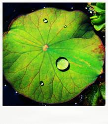 'Lotus leaf' pola by mokona73