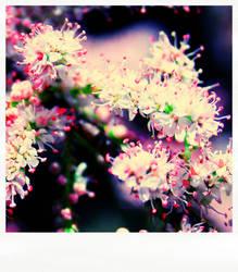Tamaris pola flowers by mokona73