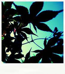 maple leaf pola by mokona73