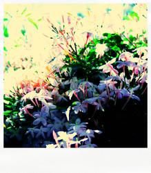 jasmine flower by mokona73