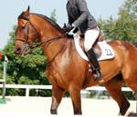 Jumper Horse 12