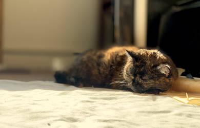 Mau in a Sunbeam