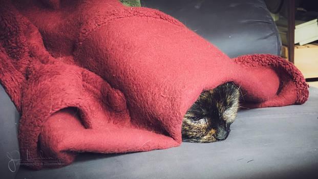A comfy nap