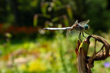 Dragon in the Garden by SilentParade284