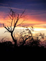 Sunsets by omarnasim