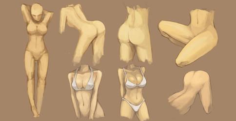 women anatomy by Pigsomedom