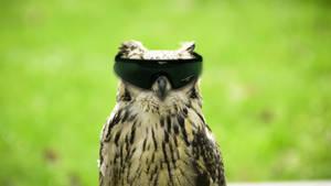 Agent Owl