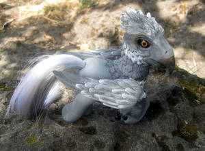 My Little Hippogriff