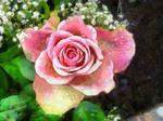 Flower1 by oldhippieart