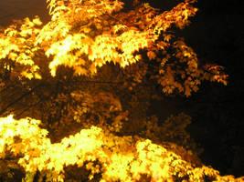 fall night 3 by blueeyedfreak